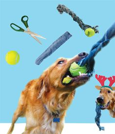 Here's a DIY tug toy for your pup! | Jack and Jill Magazine! My dog Blu is the model :-)