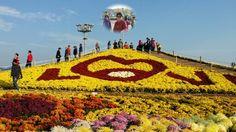 마산가고파 국화축제