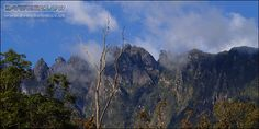 Seen from the Nepenthes trail at Mesilau, the afternoon clouds cloak the summit peaks. Mount Kinabalu, Sea Level, Borneo, Cloak, Natural World, Trail, Exotic, Tropical, Mountains