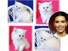 """Have Mercy!Kim Kardashian has an adorable new friend! """"My new baby Mercy! #TeacupPersian,"""" she tweeted on Sept. 16, sharing these super-cute shots of her cuddly new kitten."""