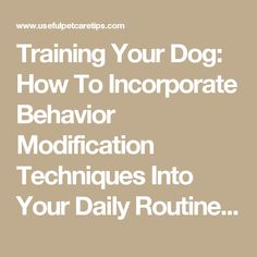 Training Your Dog: How To Incorporate Behavior Modification Techniques Into Your Daily Routine – Useful Pet Care Tips
