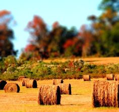 Still think bales of hay are gorgeous like this, even if Brittany gives me shit for it.