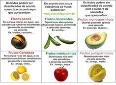 fruto tipo drupa - Pesquisa Google