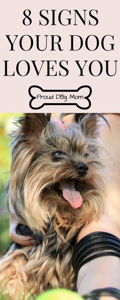 8 Signs Your Dog Loves You |