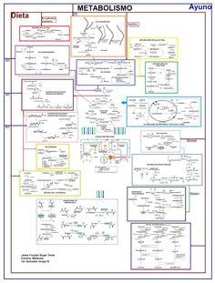 Resúmenes de bioquímica: Metabolismo en toda su extensión