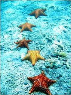 Starfish in the clear ocean water. Lost Ocean, Sea And Ocean, Ocean Ocean, Life Under The Sea, Wale, Underwater Life, Deep Blue Sea, Ocean Creatures, Tier Fotos