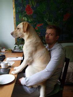 Cachorros espaçosos! Também quero fazer parte do almoço. Cadê meu prato?