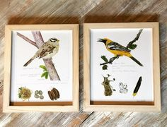Wood Framed Bird Picture, 2 Styles