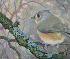 """Daily Paintworks - """"Tufted Titmouse in Winter Bird Study"""" - Original Fine Art for Sale - © Alida Akers"""