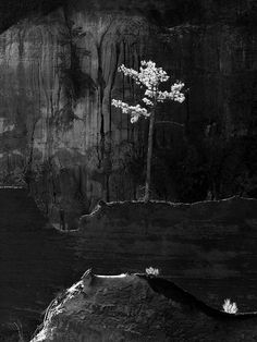 Lone pine Winthrope Hiers (Savannah, GA) (via Photo Contest Finalist - Lone pine | 3rd Annual Photo Contest | Smithsonian Magazine)