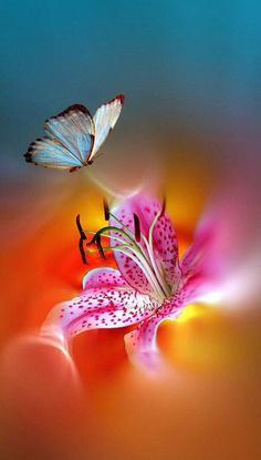 [New] The 10 Best Foods Today (with Pictures) Beautiful Bugs, Beautiful Butterflies, Beautiful Flowers, Fotografia Macro, Butterfly Pictures, Butterfly Wallpaper, Butterfly Artwork, Butterfly Kisses, Beautiful Creatures