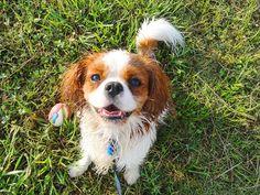 He likes ball