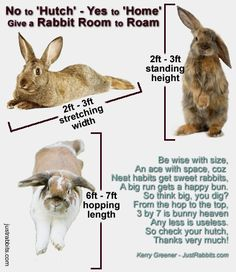 Room to Roam Rabbit Home - Rabbits should have room to move from the hop to the top. HAPPY rabbits get 3 x 3 x 7 ft house and a 8 x 4 ft run but HAPPIER rabbits get more, much more!