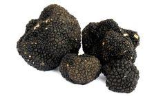 tartufi neri estivi black summer truffle