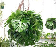 Loose Leaf Florista Melbourne Australia Ikebana influence ; Gardenista