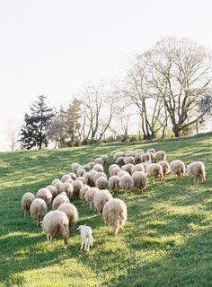 Italian Countryside by Jose Villa