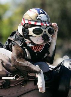 Chopper The Biker Dog (www.chopperthebikerdog.com)