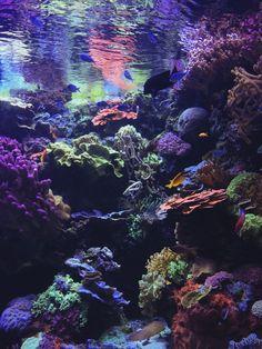 c/o Enjoy Ocean Underwater, Underwater Creatures, Ocean Creatures, Beautiful Sea Creatures, Under The Ocean, Piper Mclean, Ocean Wallpaper, Sea World, Underwater Photography
