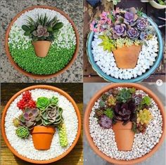 Sterile soil for Indoor Plants . Sterile soil for Indoor Plants . 65 Best Indoor Plant Care Images In 2020 Succulent Gardening, Planting Succulents, Succulent Ideas, Container Plants, Container Gardening, Indoor Gardening Supplies, Gardening Tips, Succulent Arrangements, Cactus Y Suculentas