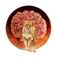 Total Lunar Eclipse in Leo - January 2018 Mystic Mamma, Moon In Leo, Lunar Eclipse, Archetypes, Spirit Animal, Full Moon, Peace And Love, Light In The Dark, Lions