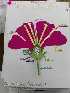 17 Ideas De Las Plantas Ciencia Natural Partes De La Flor Partes De La Planta