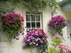 I love my hanging baskets and windowboxes at my cottage