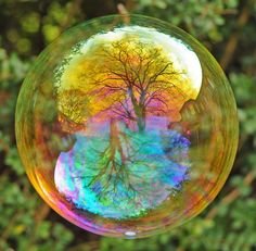 Tree captured in an iridescent soap bubble!