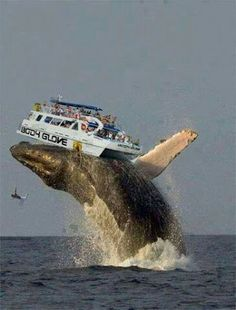 lol geddim'  A whale Lifted the Boat Accidentally in Hawaii