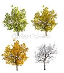 「isolated fall trees」の画像検索結果