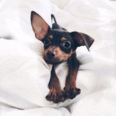 ☆ . @selinsunays via @dogsofinstagram