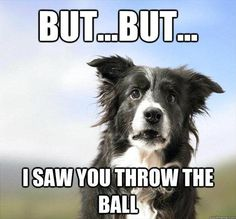 you threw the ball dog meme | But I saw you throw the ball | Lets have some fun..Lets have some ...