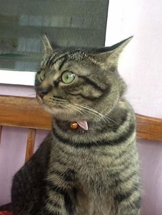 Oh my god. its a lizard - http://cutecatshq.com/cats/oh-my-god-its-a-lizard/