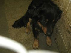 Jack is a 1 year old male Collie mix. He is up to date on his vaccinations