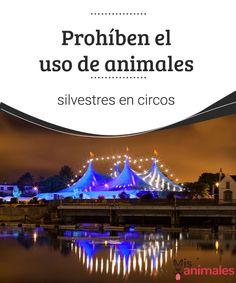 Prohíben el uso de animales silvestres en circos  Una novedosa ley en México prohíbe el uso de animales silvestres en circos. Esto ha alegrado a las asociaciones defensoras de los derechos de los animales. #iniciativa #bienestar #curiosidades