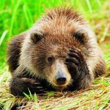 Bear - pixdaus.com