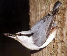 soorten vogels in de tuin tijdens de winter mussen merels roodborstje herkennen van vogels