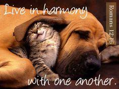Harmony - StrengthsFinder