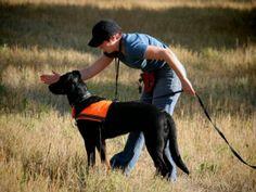 Kaikessa koiran työ- ja harrastuskäytössä on muistettava huolehtia koiran hyvinvoinnista.