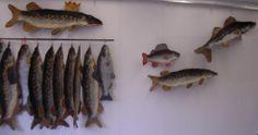 """""""kalat seinällä"""""""