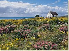 Paternoster and St Helena Bay near Cape Town / West Coast Pictures To Paint, Nature Pictures, South Afrika, St Helena, Places Of Interest, Cape Town, Beautiful Landscapes, West Coast, Landscape Paintings