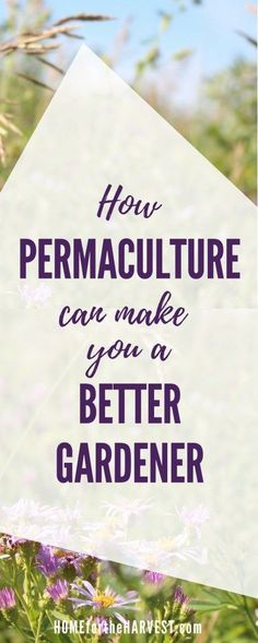 How Permaculture Can Make You a Better Gardener | Home for the Harvest #DesertLandscape