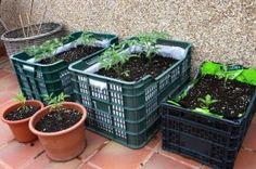 El Huerto en Casa Container Gardening Vegetables, Vegetable Garden, Huerta En Casa Ideas, Gemüseanbau In Kübeln, Plastic Crates, Backyard Landscaping, Organic, Landscape, Green