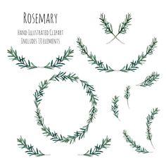 Clipart Illustration Rosemary herb wreath frame and, Rosemary Flower, Rosemary Herb, Body Art Tattoos, Girl Tattoos, Tatoos, Kranz Tattoo, Rosemary Tattoo, Laurel Tattoo, Croatian Tattoo