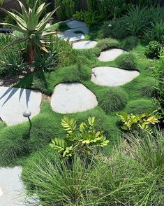 #outdoorestablishments - Dinosaur footprints? Seriously, how many times do we need to say it - keep off the grass! @gathercoaustralia Garden Hedges, Terrace Garden, Garden Paths, Garden Bed, Garden Crafts, Footprints, Bed Design, Dream Garden, Stepping Stones