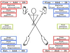 PNF patterns - pelvis and leg diagonals