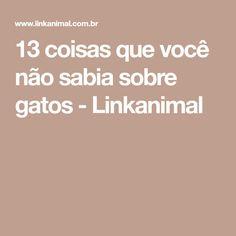 13 coisas que você não sabia sobre gatos - Linkanimal