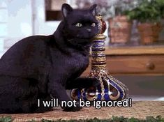 Celebrate Black Cat Appreciation Day With These Iconic Black Cats Sabrina Cat, Geeks, Salem Cat, Cat Memes, Funny Memes, Funny Gifs, Hilarious, Salem Saberhagen, Black Cat Aesthetic