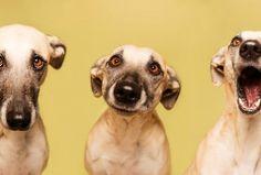 """Fotógrafa saca """"caritas"""" de perros - Grupo Milenio"""