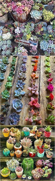 #succulent #garden ideas