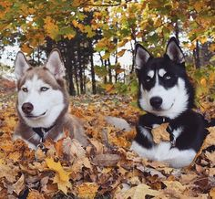 Those are beautiful dogs ... I just want to hug them.